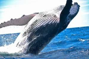 Where to Go Whale Watching in Ballina and Byron Bay